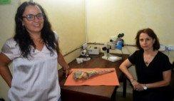 Investigadores platenses reconstruyen en 3D el cráneo y cerebro de dos cocodrilos del Mesozoico