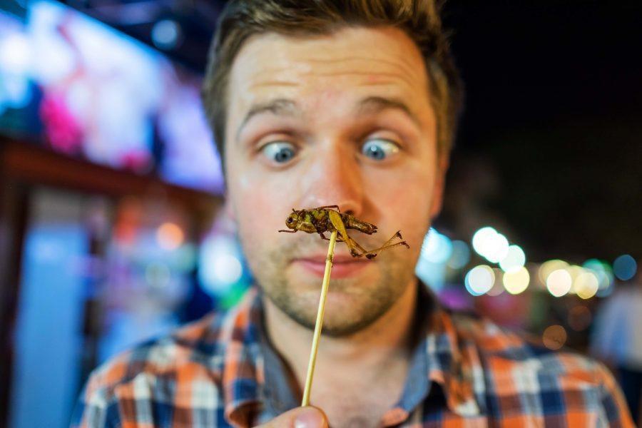 comer-insectos-