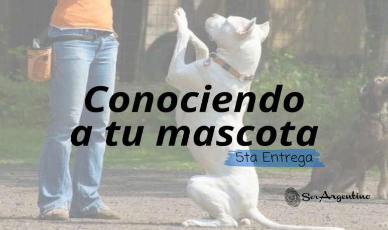 Foto-artículo-mascotas5