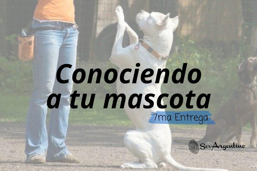 Foto-artículo-mascotas7