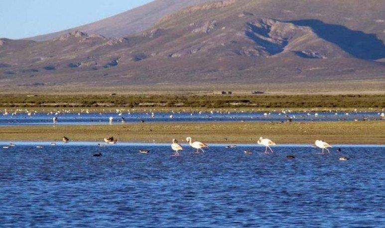 Laguna-de-los-Pozuelos