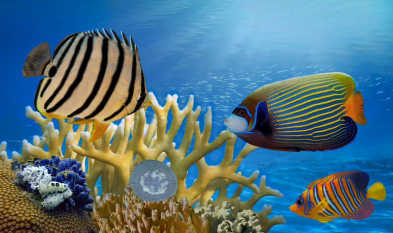 Underwater scene, showing different colorful fishes swimming. Red Sea