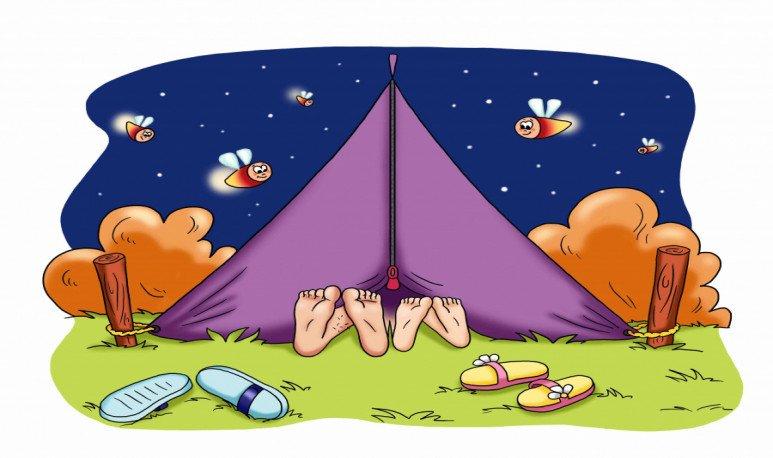 insectos camping