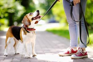 Mascota - paseo