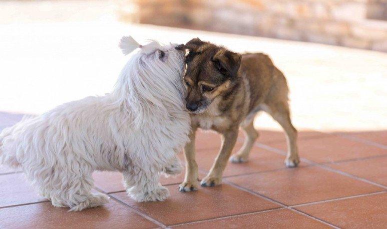 Perros relacionándose.