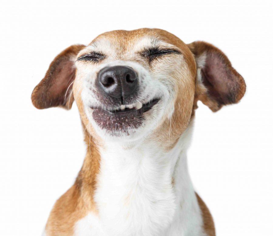 perro sonriendo