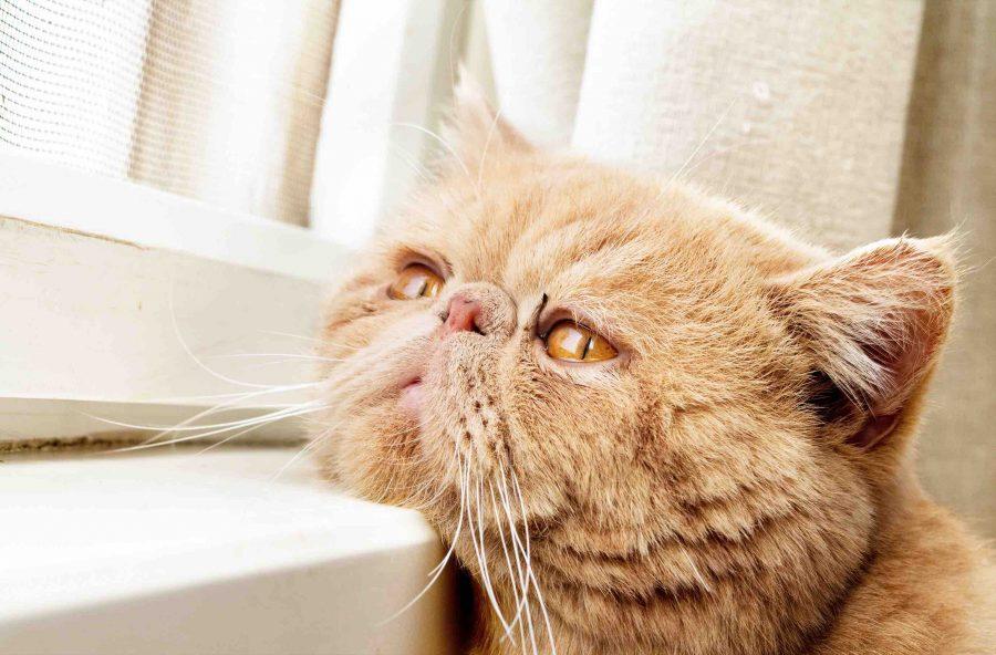 gato-triste1