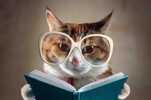 vision-gatos