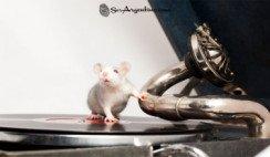 La-rata-cruel