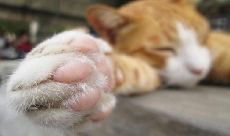 Por-qué-le-buscamos-la-quinta-pata-al-gato