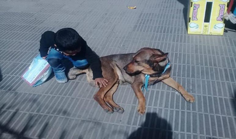 Colita-el-perro-jujeño