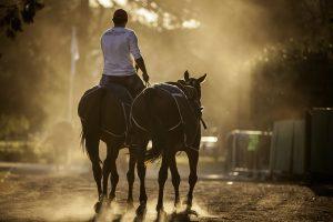 Pasion-por-los-caballos