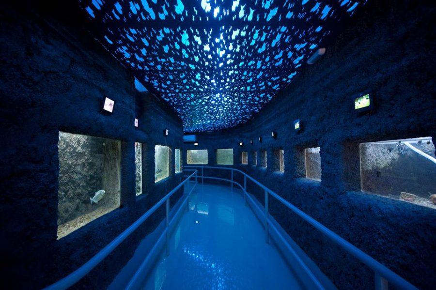 El-acuario-municipal-mendoza