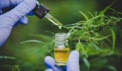 Aceite-de-Cannabis