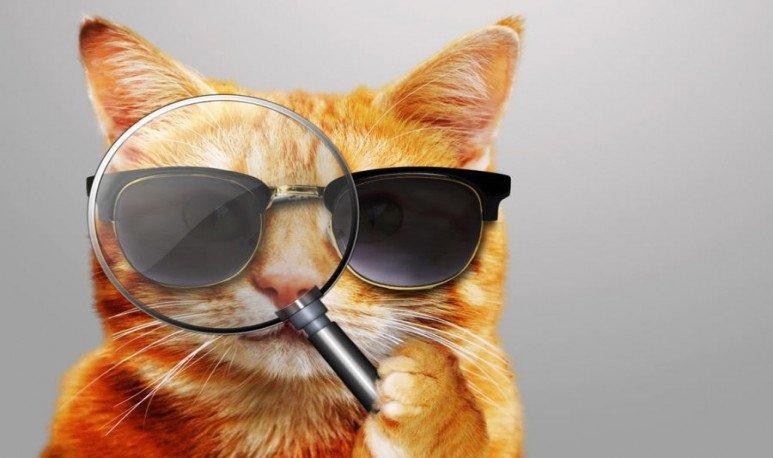 Gato-detective-misterio