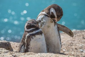 Peninsula-pinguinos