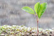 lluvia-planta