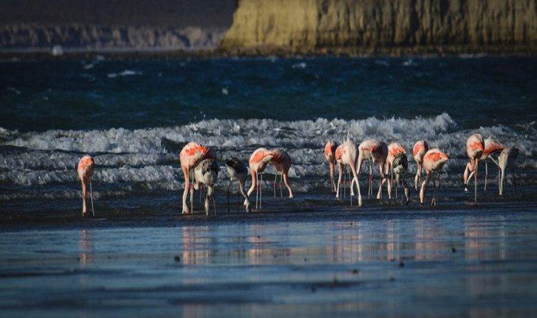 peninsula-birds