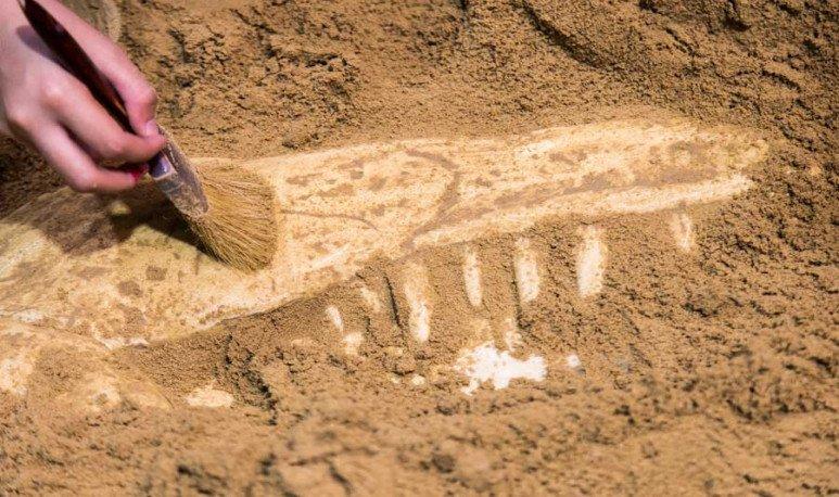 restos-fosiles