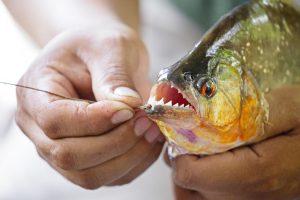 pesca-de-pirañas