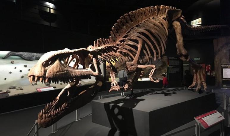 Museo-Paleontológico