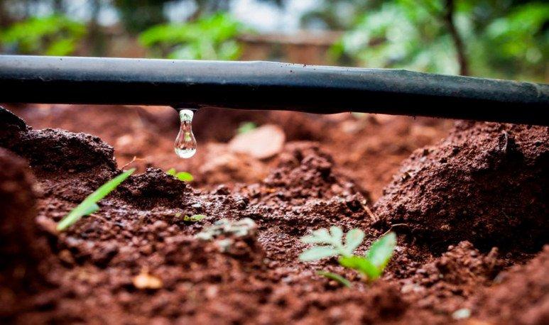 La tecnología al servicio de la producción rionegrina