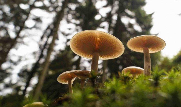 Secretos sobre los hongos cordobeses