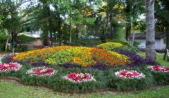 Región de las Flores
