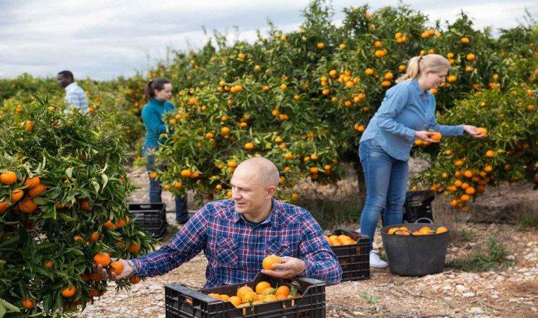 despoje de citrus Malabrigo