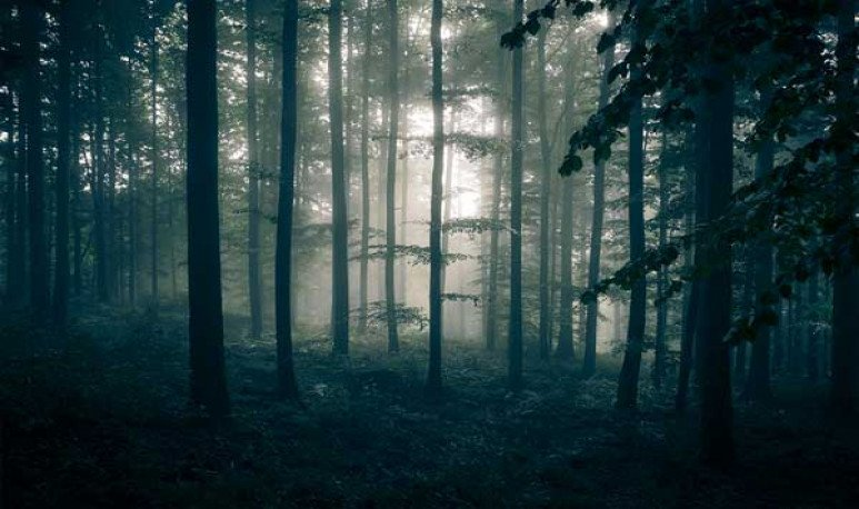 Leyenda del bosque