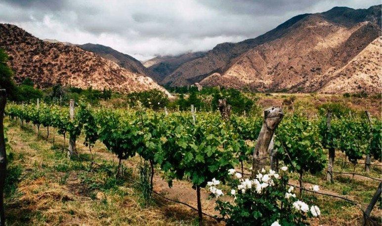 viñedos de los valles calchaquies