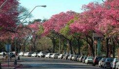 Los mejores árboles santafesinos