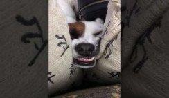 El perro que duerme riendo - Humor