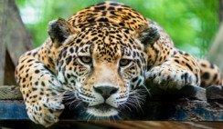 7 especies en peligro de extinción en el NOA