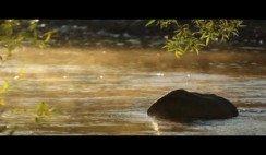 Alto Río Percy.