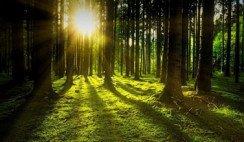 Bosque de la Poesía de Villa Carlos Paz