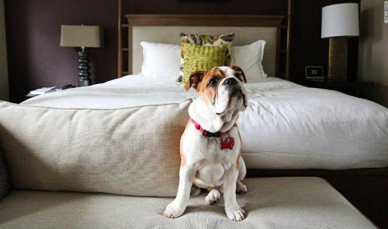 hotel pet friendly