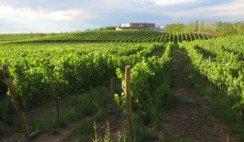 """La producción vitivinícola en la provincia de Neuquén creció exponencialmente en los últimos años. Fue tanto el crecimiento en las últimas dos décadas, que la provincia se posiciona como la tercera en cantidad de litros, sólo detrás de los gigantes, Mendoza y San Juan. Además, Neuquén es la que tiene mayor posibilidad de seguir desarrollándose.  Una importante porción de los neuquinos, viven del turismo. La relación entre estos y la producción de vinos es estrecha, al punto que desde el Estado provincial se promueve como poseedora de la Ruta de los Vinos Neuquinos.  Te contamos cuáles son algunos de lasparadas más obligadas a la hora de tomarse un vino en Neuquén.    Añelo no es sólo petroleo Añelo fue conocido en el último tiempo por la explotación de los yacimientos encontrados en la región de Vaca Muerta. El municipio ubicado a 100 kilómetros de la capital neuquina, se duplicó en tamaño y población tan sólo en un par de años. Con más de cuarenta viñedos, Añelo se posiciona como la región que más creció en cuanto a cultura vitivinícola.  La Bodega del Añelo es una de las bodegas artesanales que rankea en la venta de litros mensuales. Posee alrededor de setenta hectáreas en producción, con las variedades Pinot Noir, Malbec, Merlot y Chardonnay. Su marca """"Cruz Diablo"""" puede ser degustada en los restaurantes más exclusivos de la provincia.  Los cultivos de la vid se realizan sin tratamientos de insecticidas, ya que los vientos de la zona evitan la formación de hongos. Tampoco se utilizan químicos nocivos en la formación del vino. Se puede visitar la bodega con previo aviso para realizar un recorrido por las instalaciones, como así también de los viñedos, y finalizar con una degustación.  La Bodega del Añelo se encuentra por la Ruta 7, antes de llegar a la ciudad homónima. En la misma región donde se haya esta localidad, también se encuentra San Patricio del Chañar, conocida exclusivamente por la actividad vitivinícola. Entre sus fértiles campos vallenses, un edificio"""