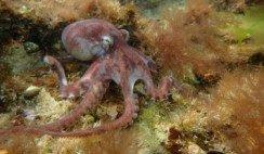 vida marina en el golfo san matias