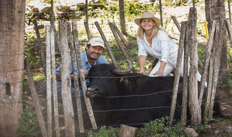 Búfalo en Córdoba