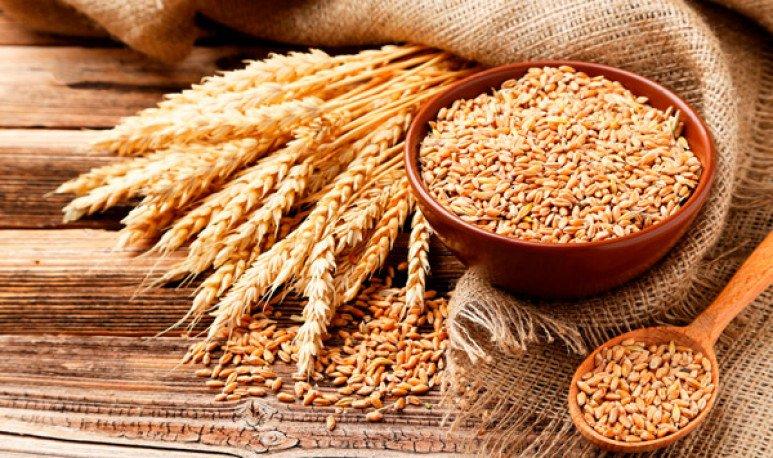 Avena y germen de trigo